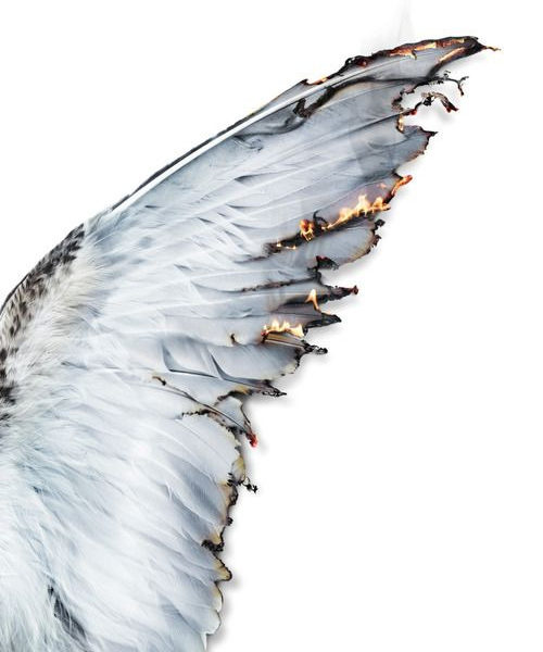 Icarus wing